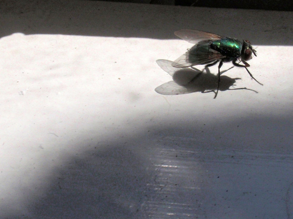 Be a fly on the wall during a very productive meeting